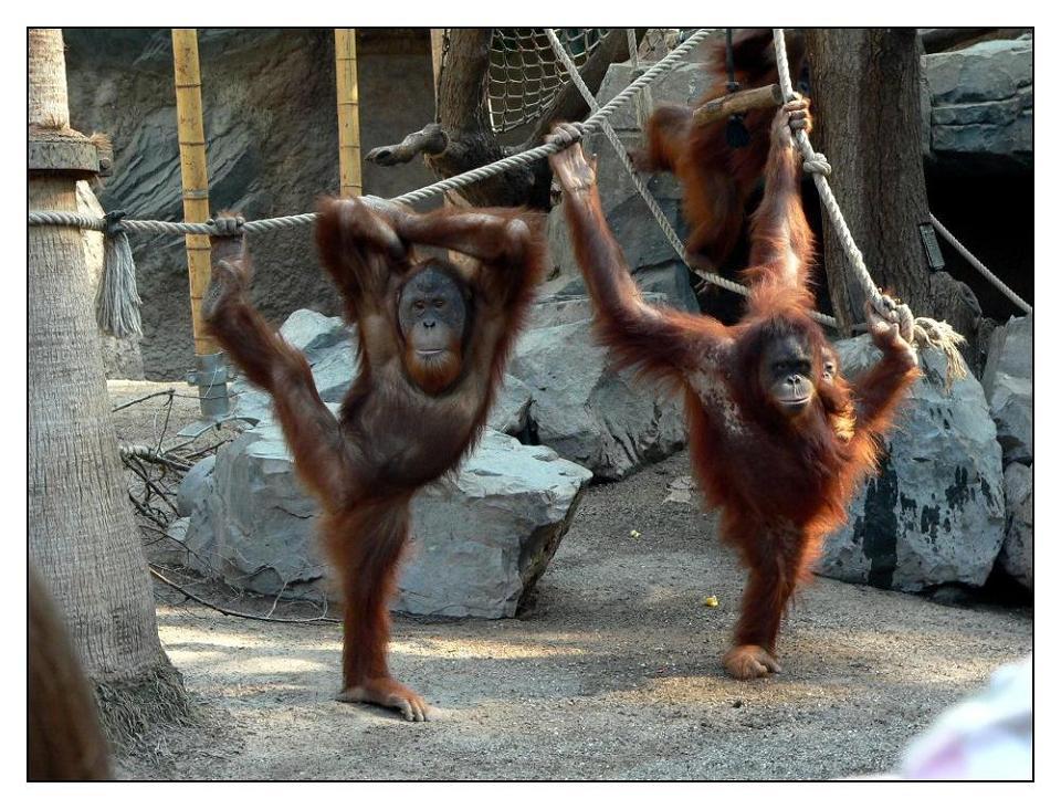 Orang-Yoga