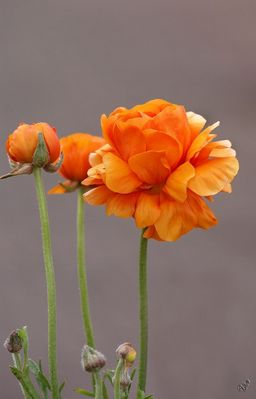 Orange ...