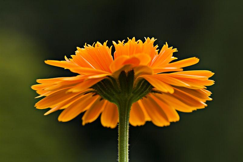 orange.....