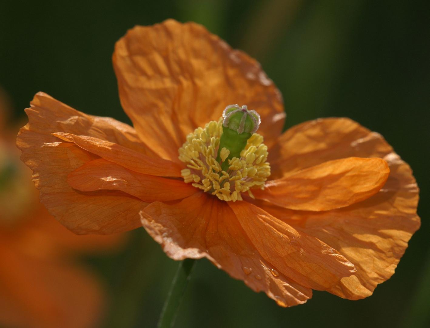 Orange................
