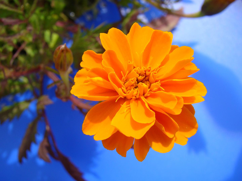 Orange auf Blau