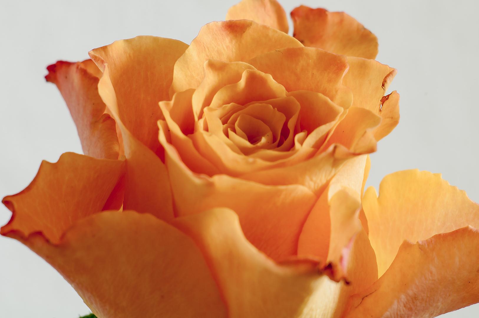..orange beauty