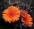 Orange Blüten II