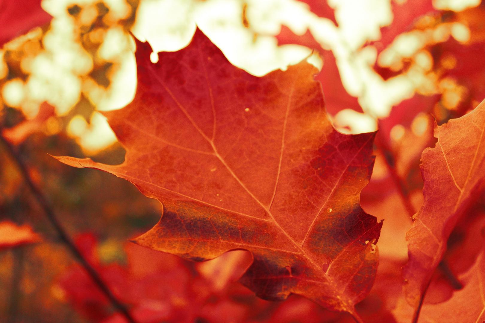 Orange Colours of Autumn