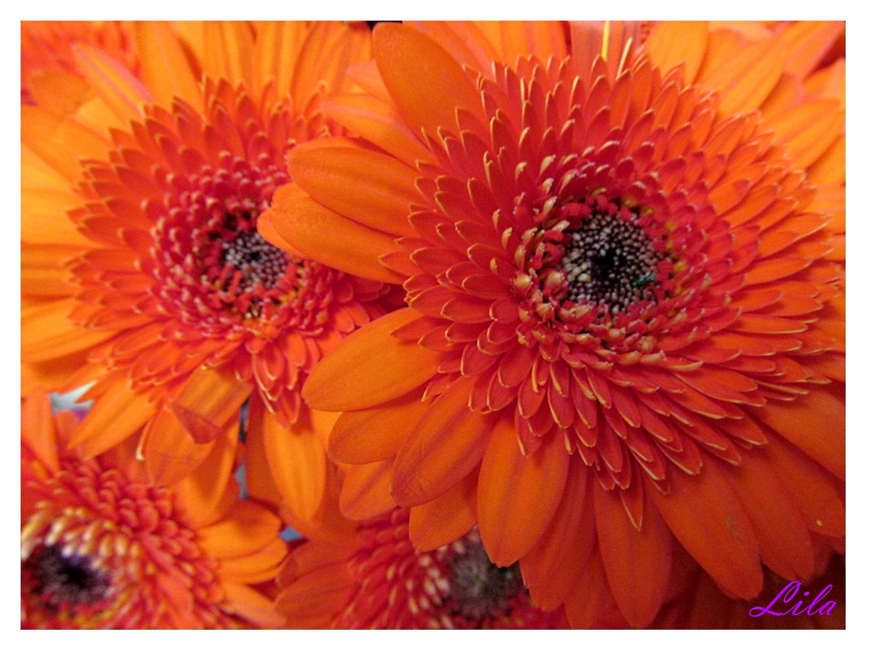 Orange ..........