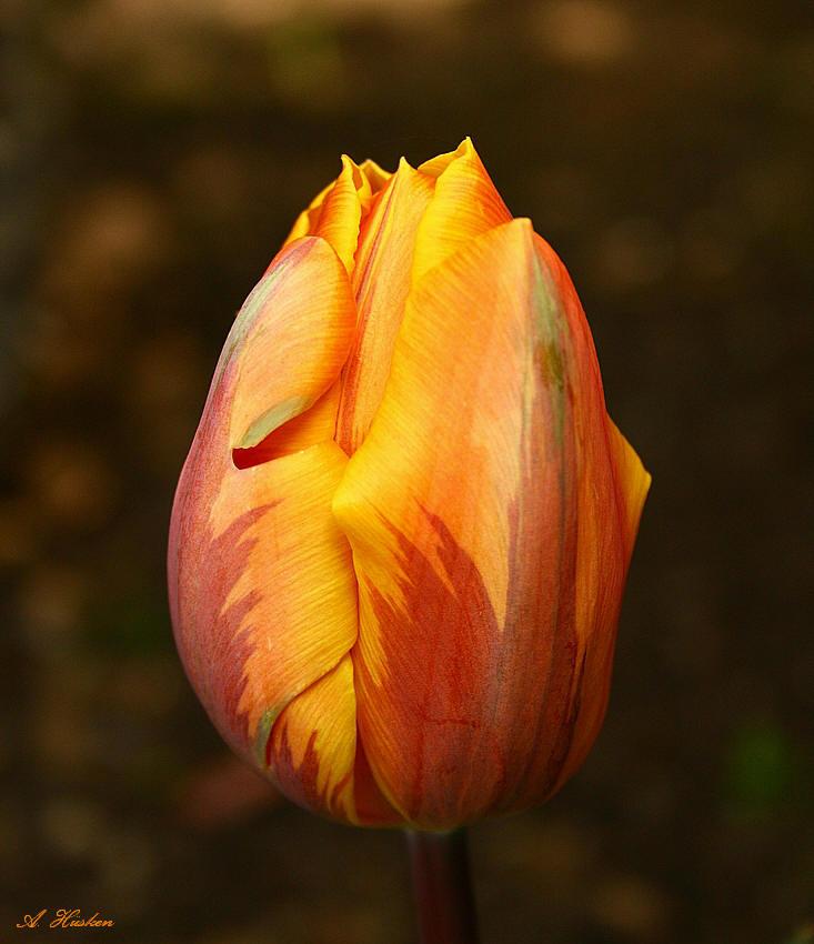 Orange-Gelb