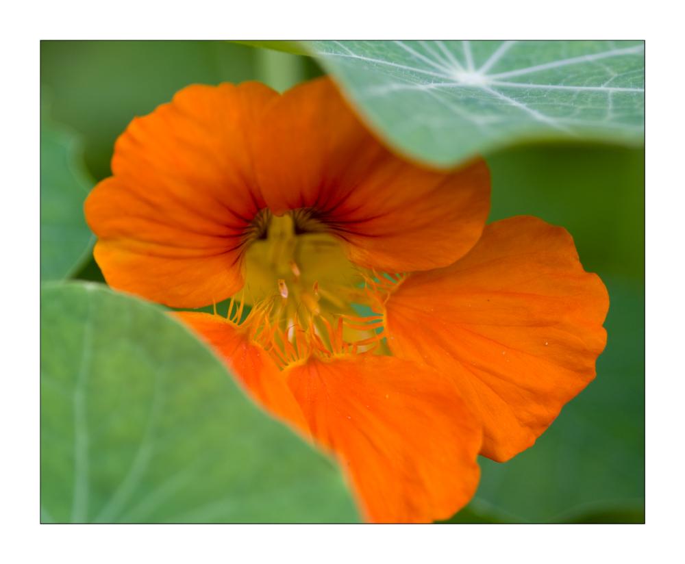 orange gr n foto bild natur makros natur kreativ aufnahmetechniken bilder auf. Black Bedroom Furniture Sets. Home Design Ideas