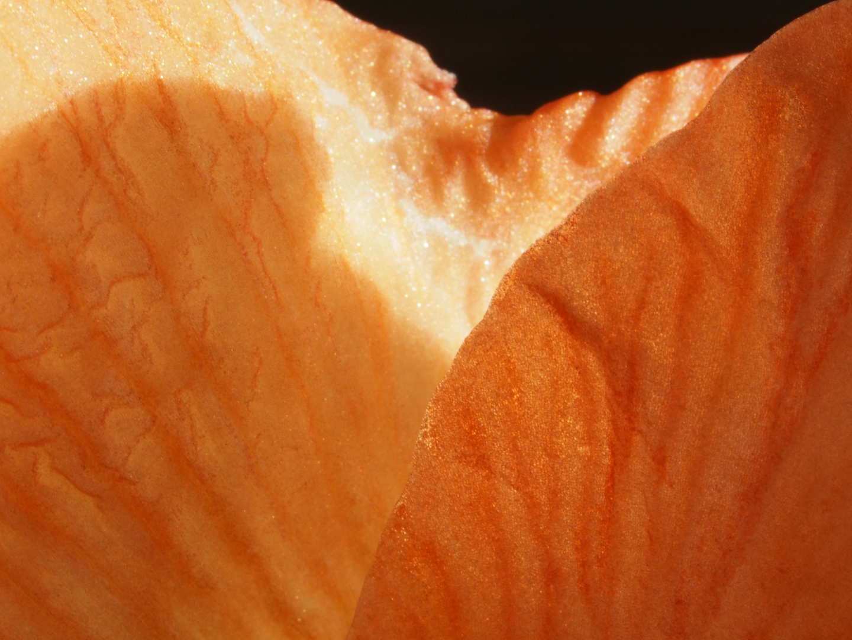 orange III