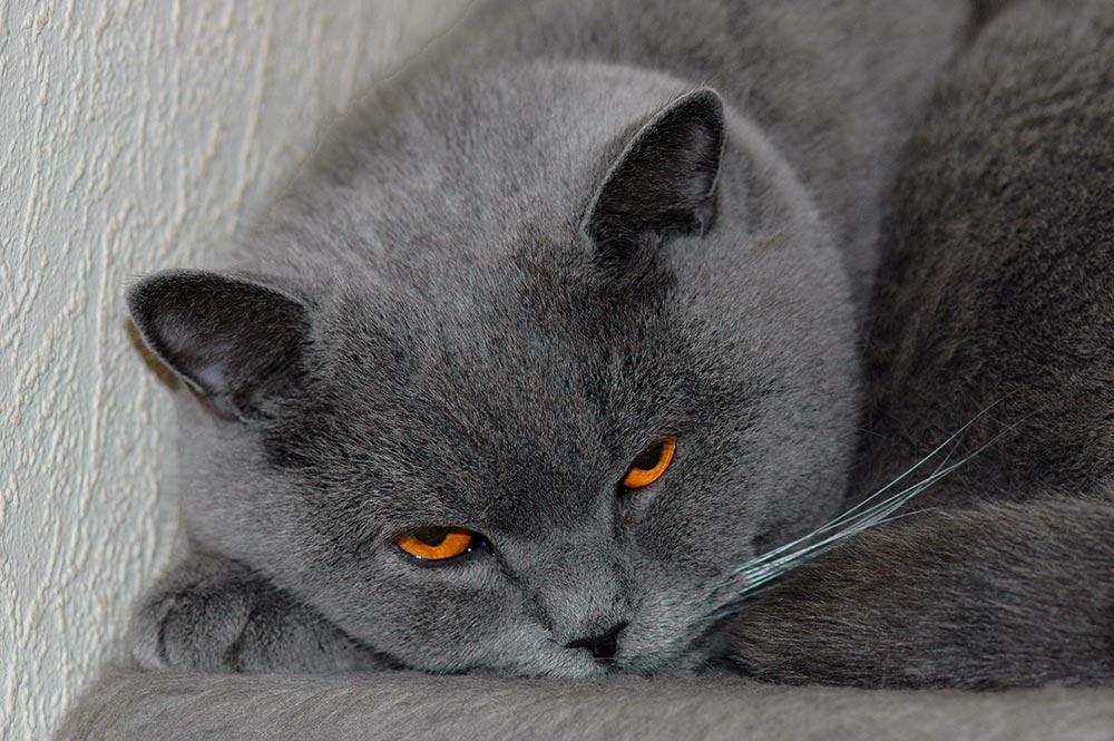 Orange in Grau