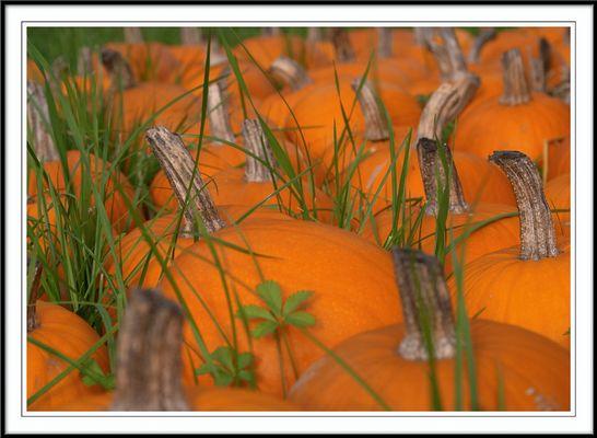 orange is the colour ...