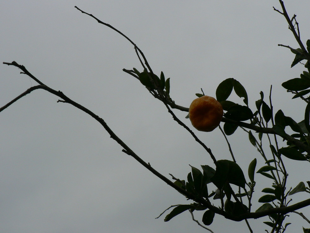 orange | mazandaran | bandpey