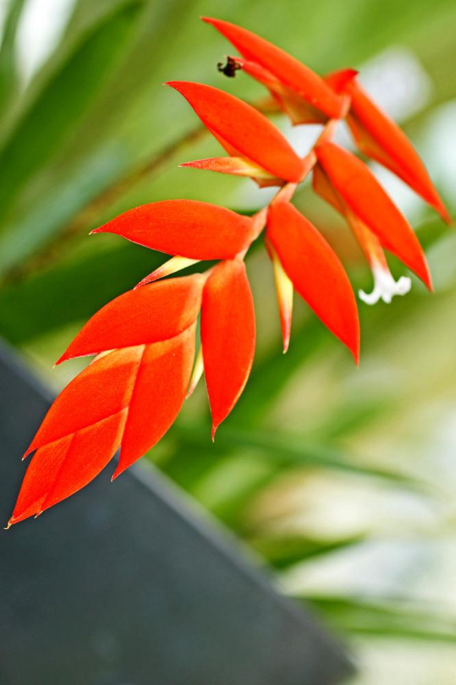 orange rote bl te foto bild anf ngerecke nachgefragt nachgefragt pflanzen form struktur. Black Bedroom Furniture Sets. Home Design Ideas