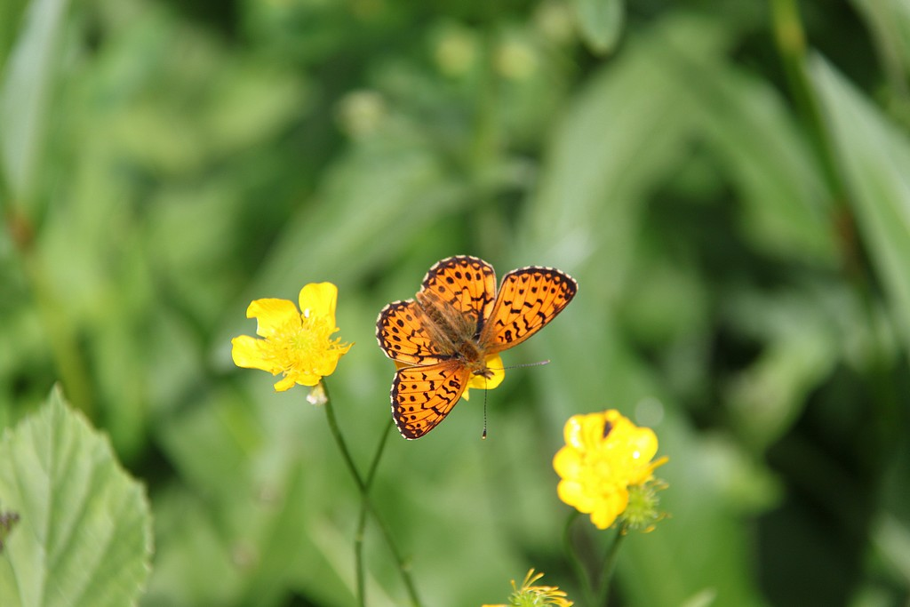 orange sur jaune la nature fait bien les choses!!!