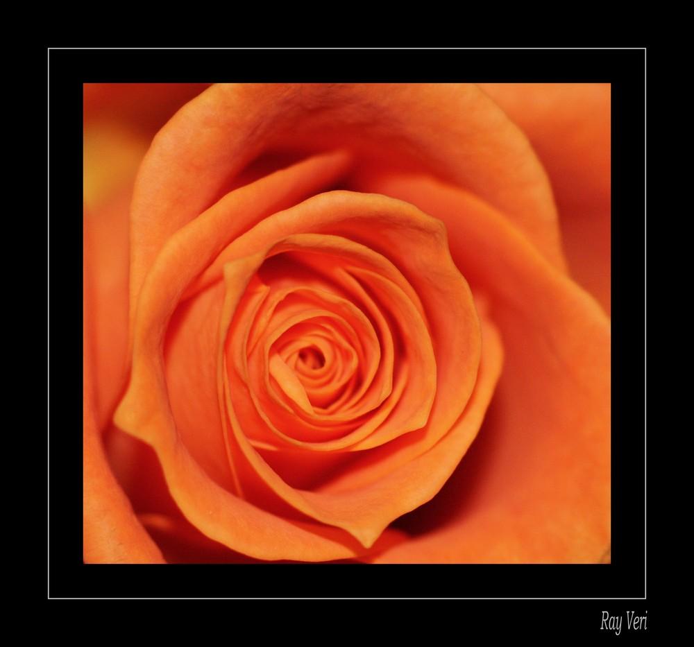 orange tu me troubles