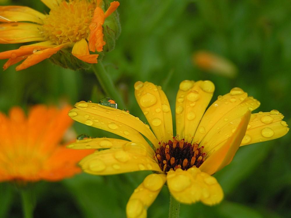 orange x grün x gelb + wassertröpfchen = ??