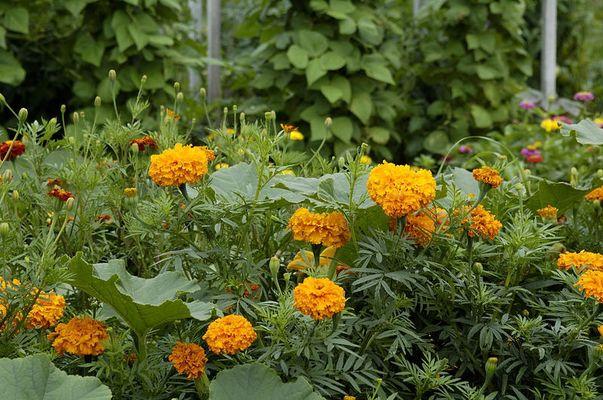 Orange>Blumen