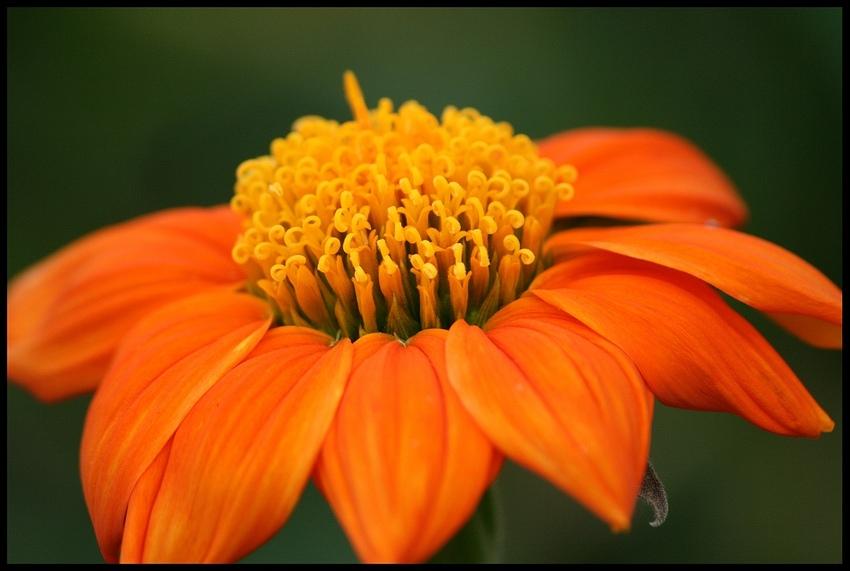 ~orange~cream~