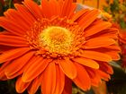 Orangefarbener Traum