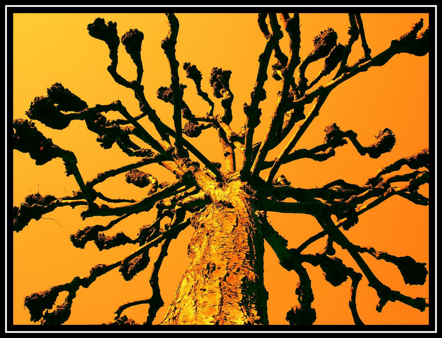 """"""" Orangen """" Baum"""