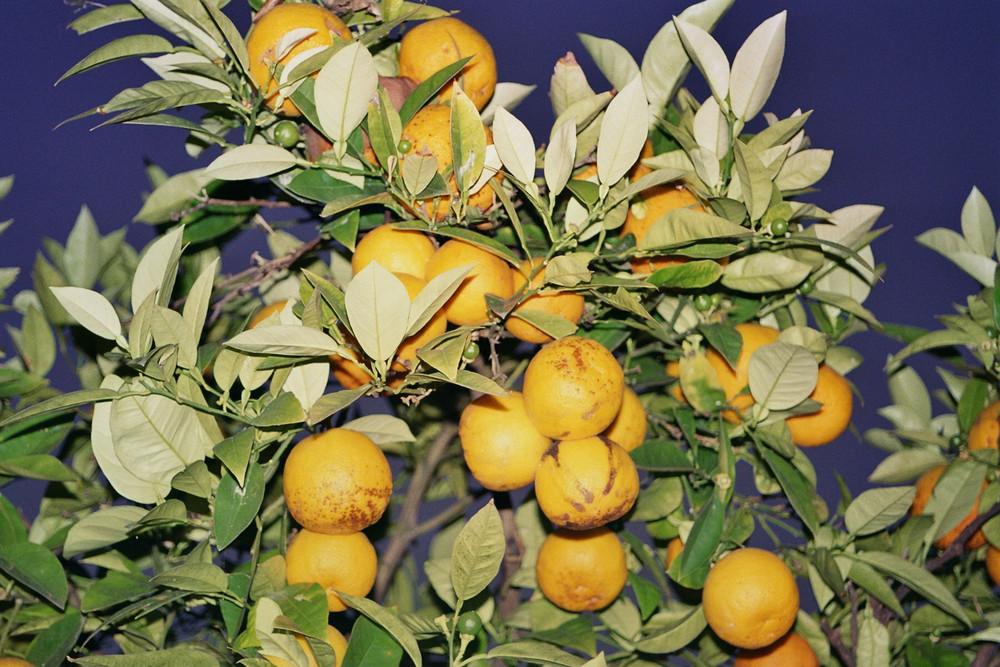 Orangen bei Nacht