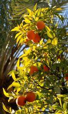 Orangenlicht in Cordoba