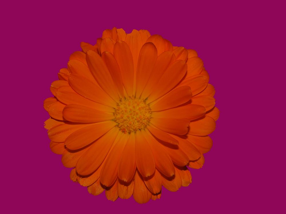 Orangenlila