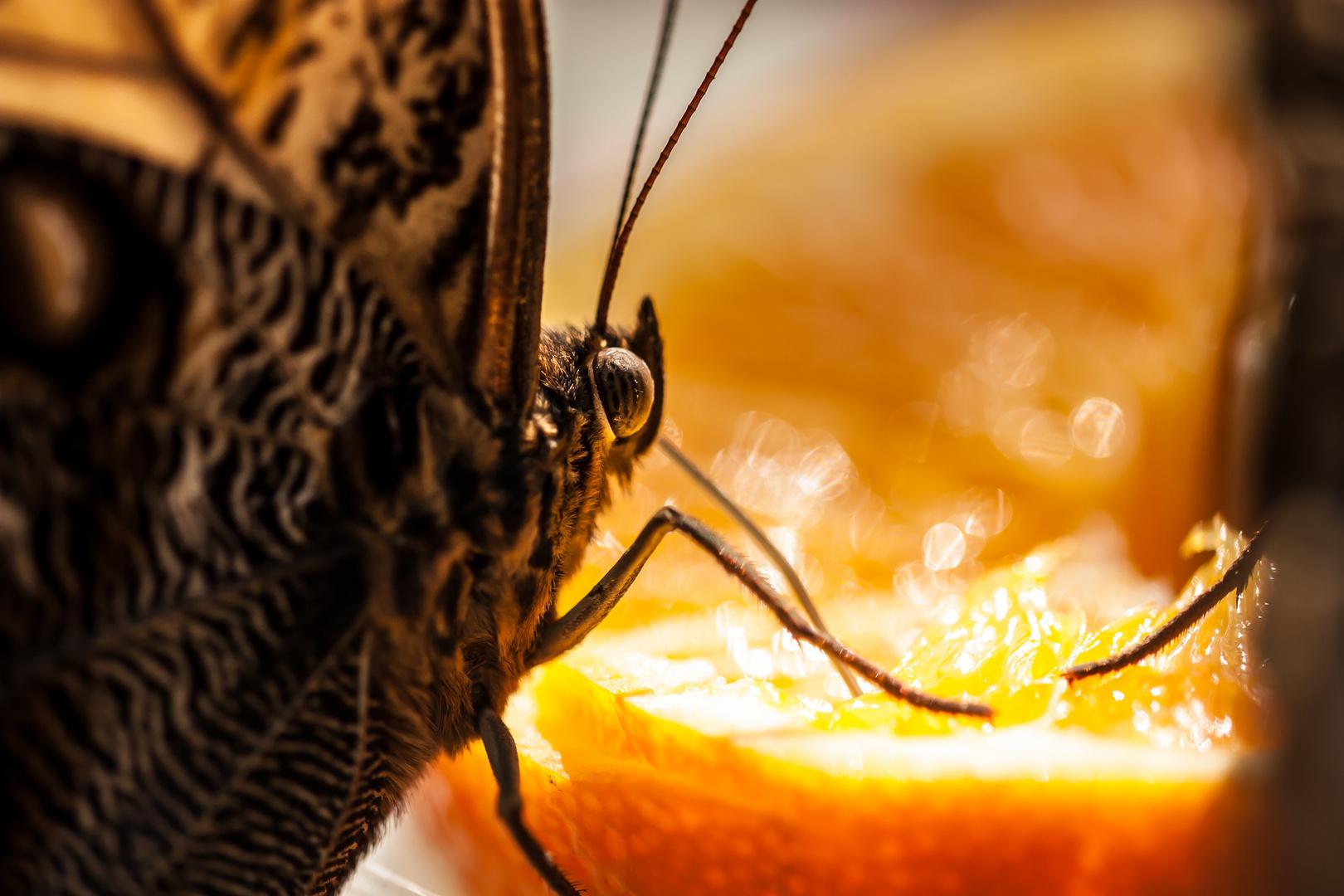 Orangensaft :-)