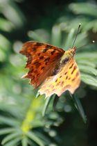 Oranje Flater