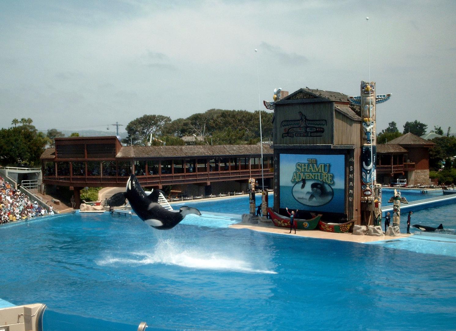 Orca im Seaworld San Diego