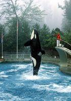Orca im Steigflug