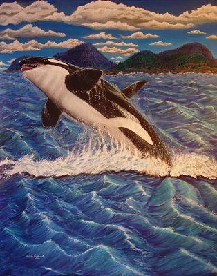 Orca vor der Küste Kanadas