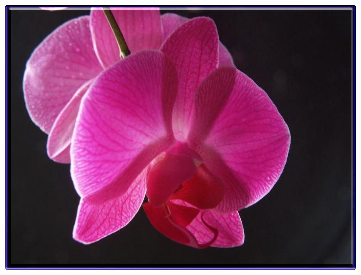 Orchide (2)