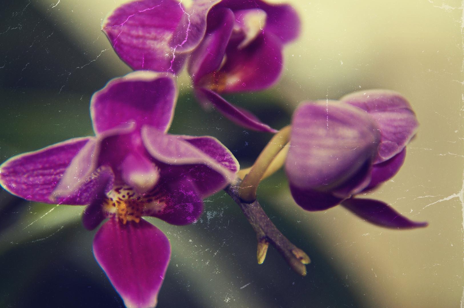 Orchide!