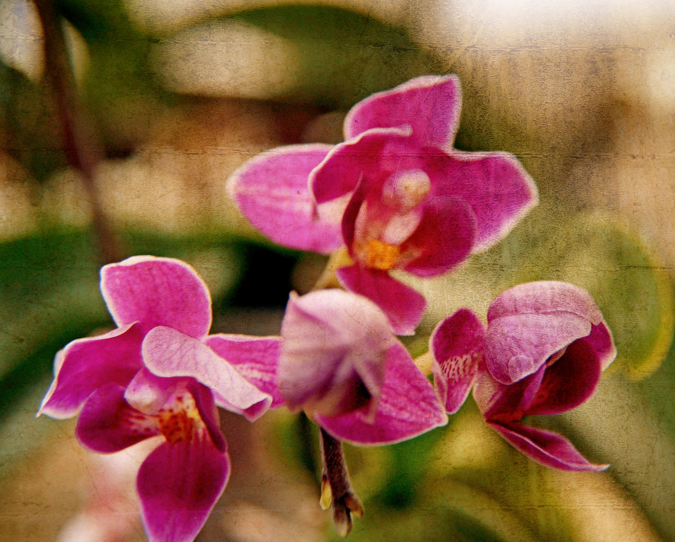 Orchide1!