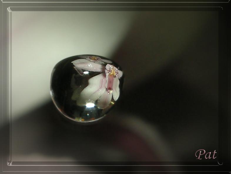 ...orchidea riflessa