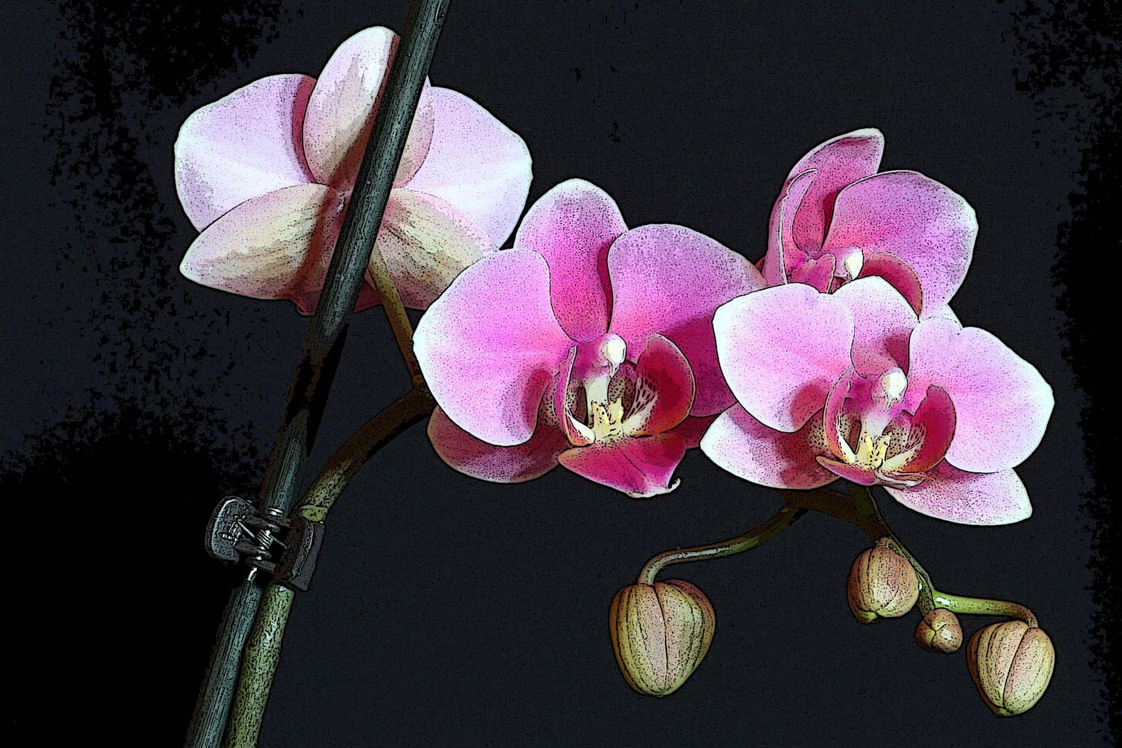Orchidee (10)