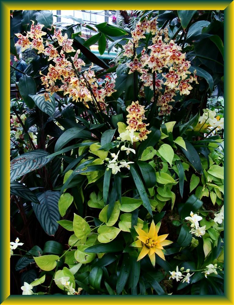 Orchidee 10
