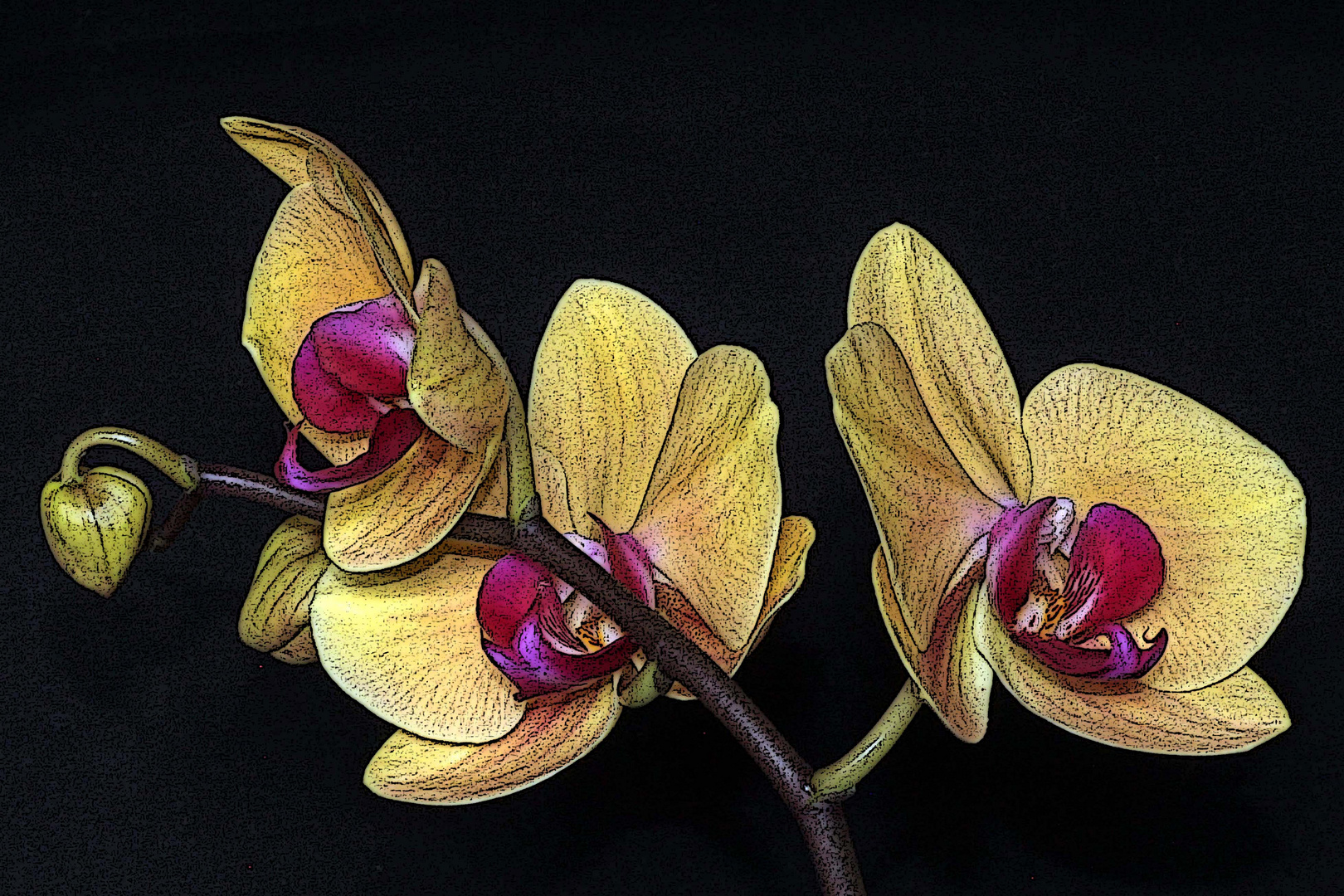 Orchidee (11)