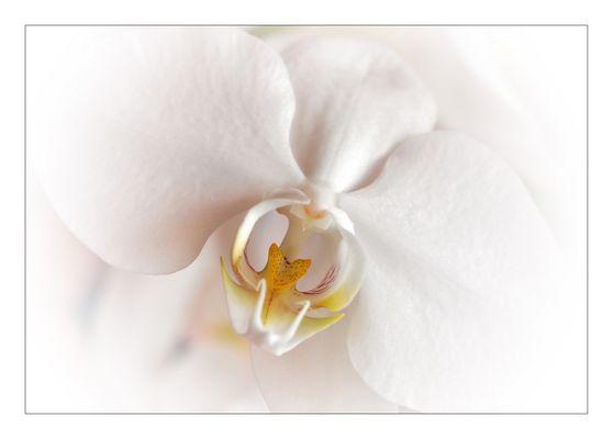 Orchidee 140909 2 B