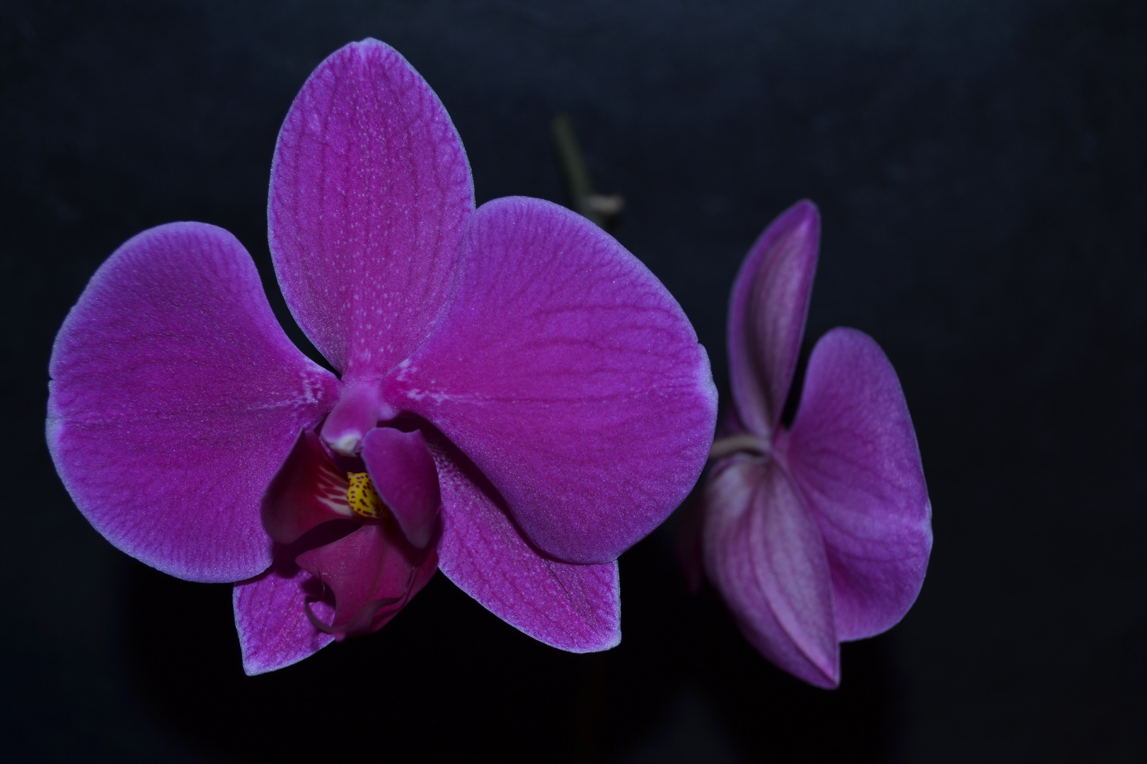 # Orchidee 2 #