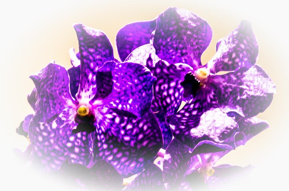 Orchidee 2-2013