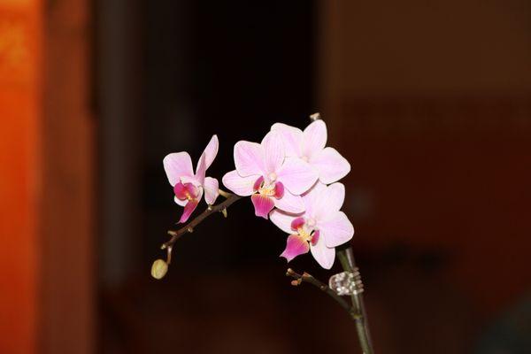 Orchidee (2)