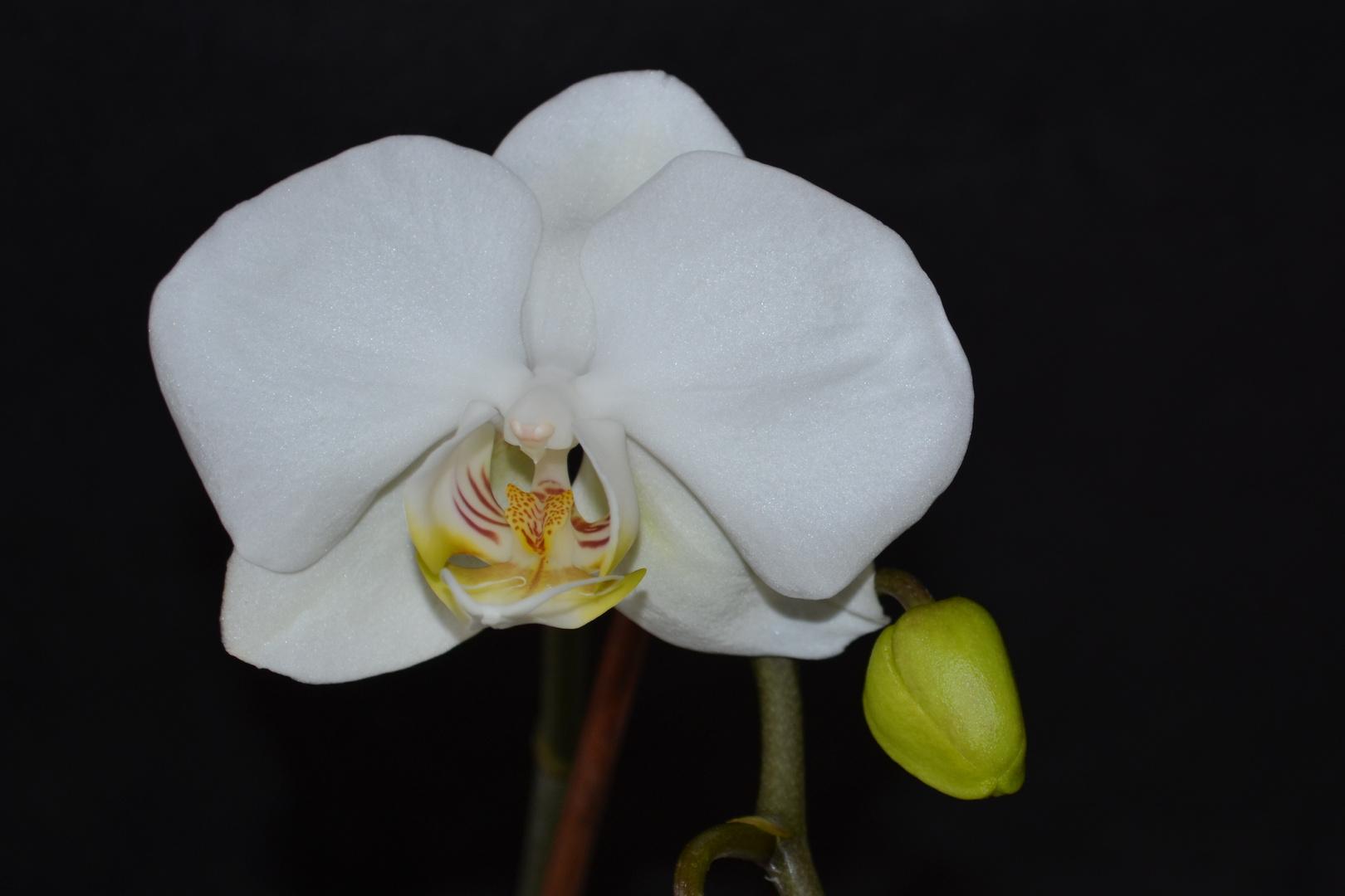 # Orchidee 3...#