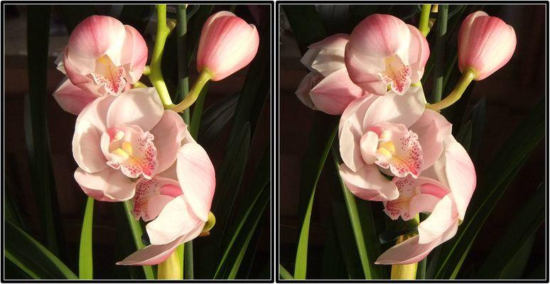 Orchidee 3D Kreuzblick