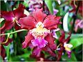 Orchidee. 4 von Josef Kainz