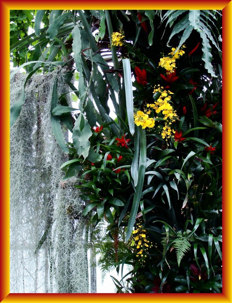 Orchidee 4