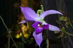 Orchidee-60