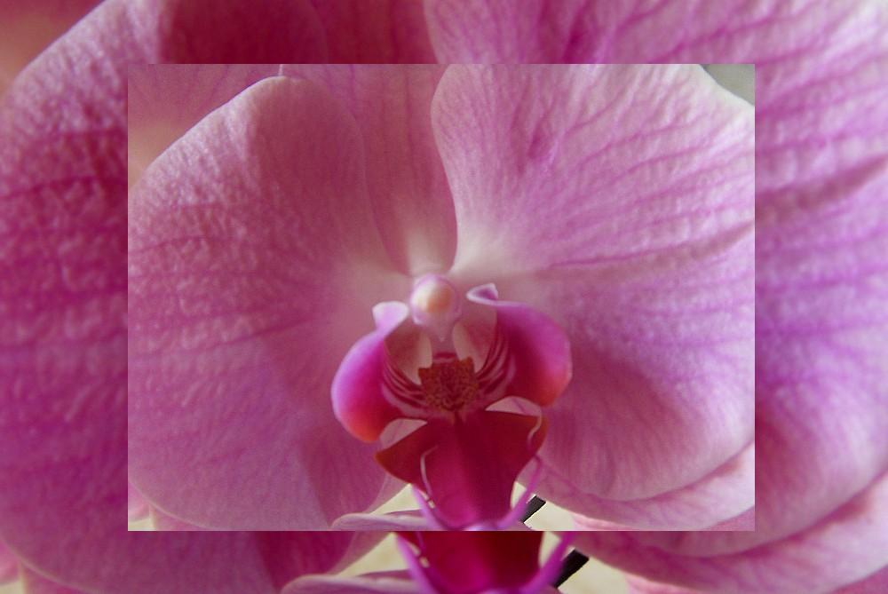 Orchidée ...