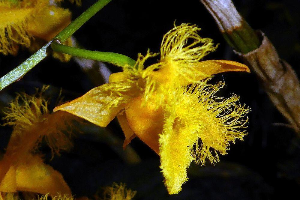 Orchidee 9