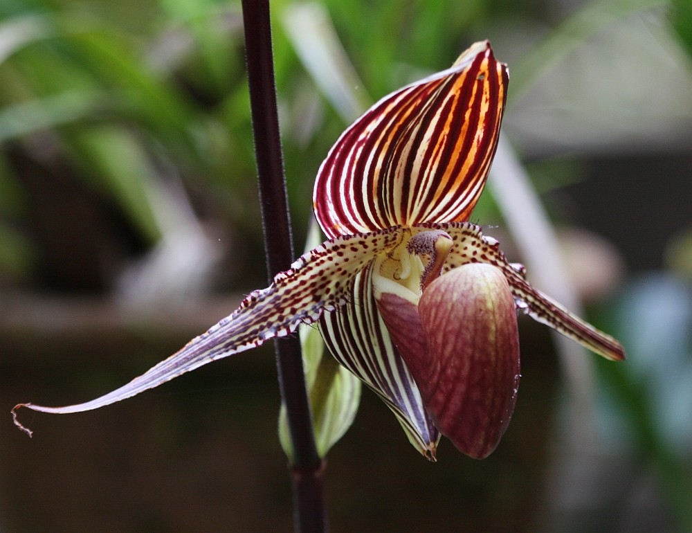 orchidee foto bild pflanzen pilze flechten. Black Bedroom Furniture Sets. Home Design Ideas